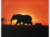 elephant-silhouette