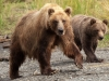 grizzly-with-cub
